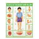 Poster - Parts of the Body
