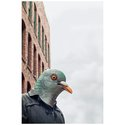 Head Mask - Pigeon